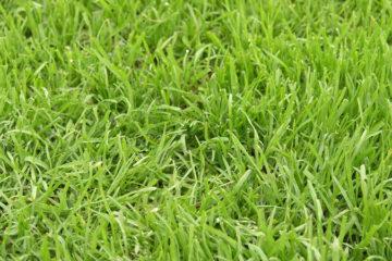 Lawn Repairs & re-turfing