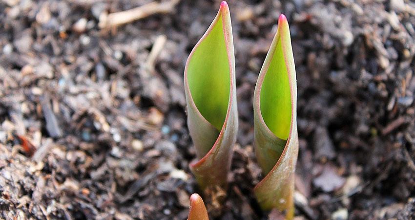 Garden Help - Planting
